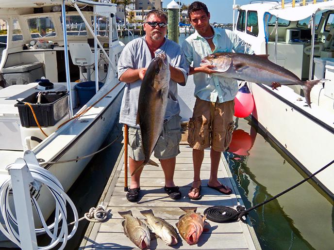 amberjack-grouper-clearwater-florida-2