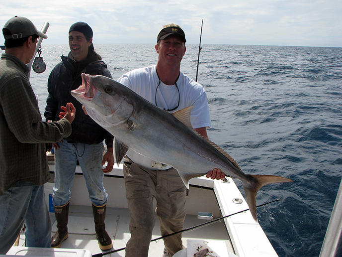 amberjack-offshore-charter-fishing-clearwater-florida