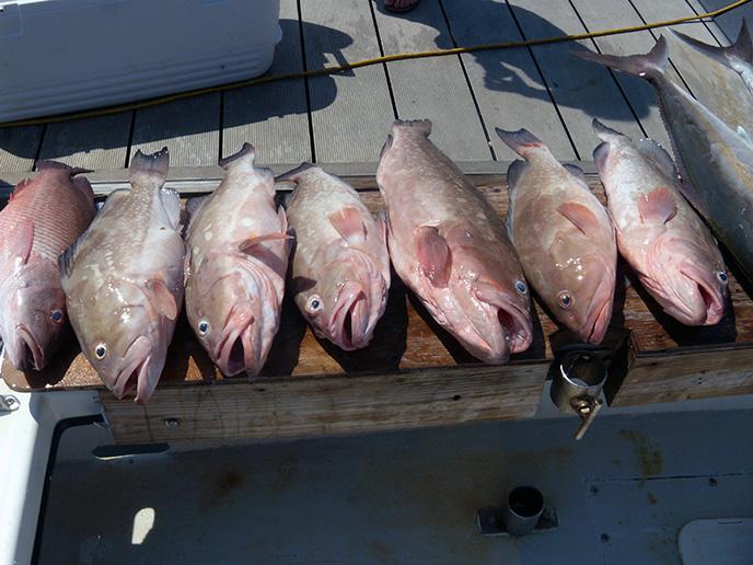 deep-sea-charter-fishing-florida-2012-2
