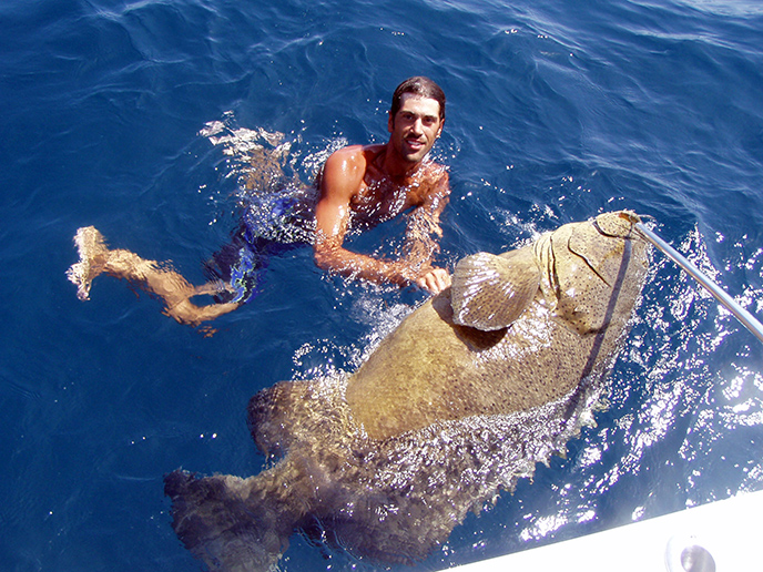 goliath-grouper-johns-pass-florida