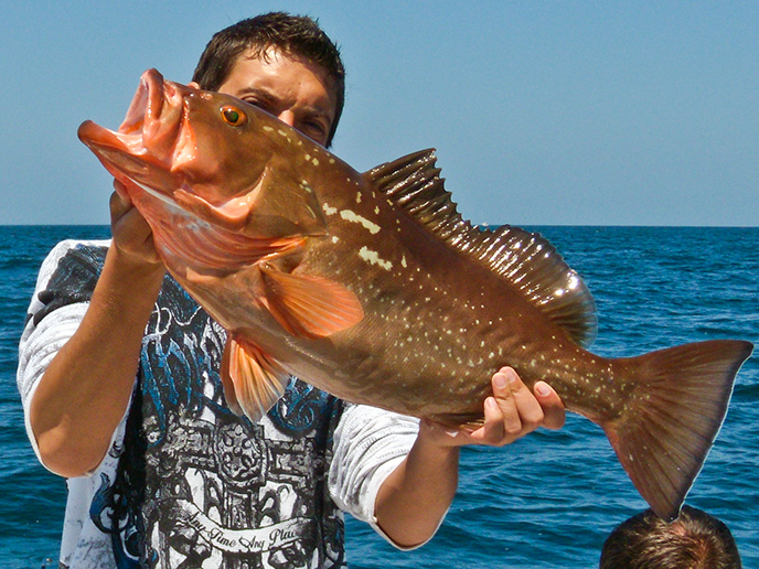 red-grouper-fishing