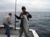 amberjack-tampa-fishing-charter-2012
