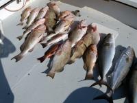 fishtaxi-fishing-charters-florida-2012-5