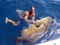 goliath-grouper-johns-pass-florida