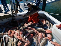 grouper-deep-sea-fishing-4