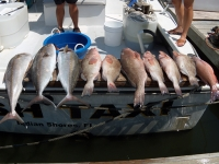 offshore-charter-fishing-florida-2012-4